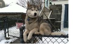 doggie on fence