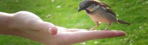 bird-in-a-gentle-hand